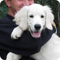 Помощь собаки щенки Горловка